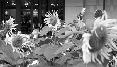 谁说春天是杭州唯一最佳赏花季
