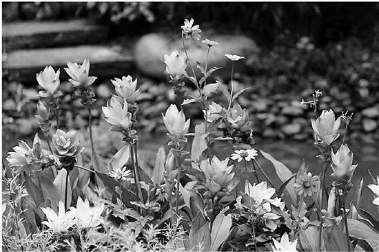 杭州植物园喊你来看秋季花展啦!