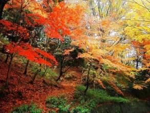 香山发布十个赏红高峰日 将实行分时入园