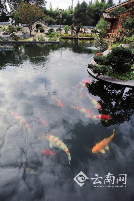 昆明旅博会17日开场 品东南亚美食 看异域风情