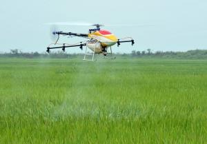 南昌县种粮大户用无人机打药 一上午喷完300亩水稻