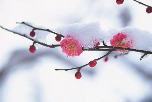 大雪节气将至 养生保健应多注重饮食起居
