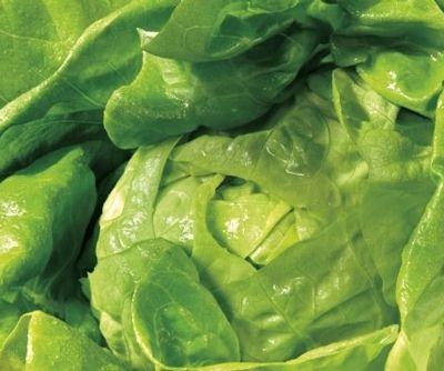 饮食养生:冬季易上火 五大蔬菜帮你排毒降火