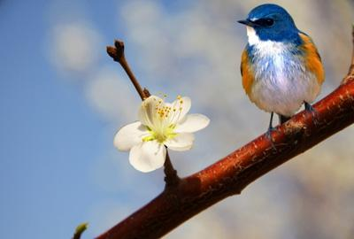 春季养生:初春多做五种养生活动 常锻炼